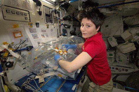 AstroSamantha sulla Stazione spaziale alle prese con i suoi esperimenti (foto S.Cristoforetti)