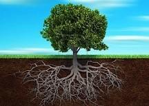 albero-trebbo